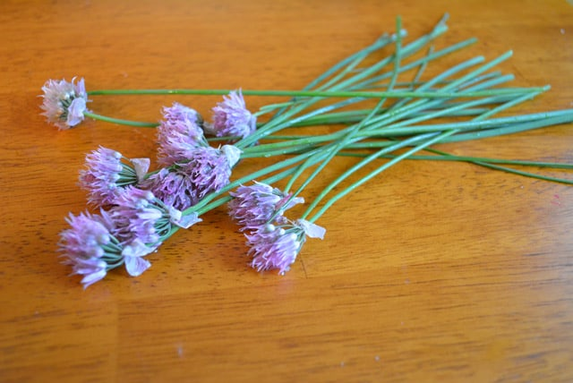 chive-flowers-web