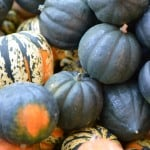 Squash – Not Just A Fall Decoration
